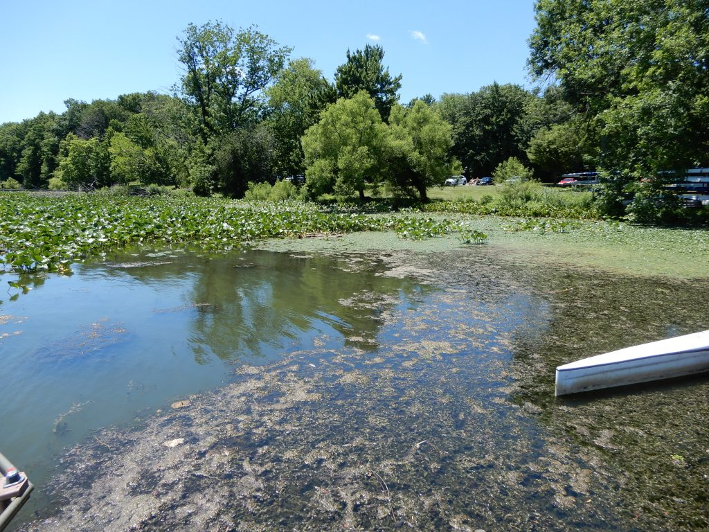 Invasive weeds follow invasive mucky sediment